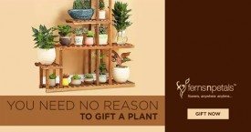Ferns n petals Flat Rs. 50  Off on Plants Category