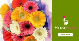 Floweraura Special Offers : Gerberas Flowers Starting From Rs. 439