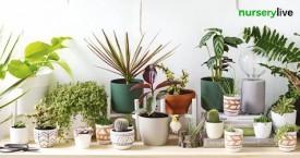 Nurserylive Mega Offer : Ceramic Planters Starting at Rs. 376