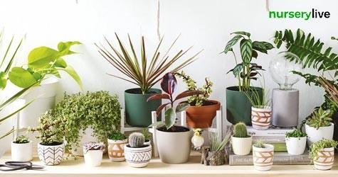 Mega Offer : Ceramic Planters Starting at Rs. 239
