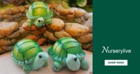 Nurserylive Mega Offer : Garden Toys Starting From Rs. 99