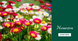 Nurserylive Great Offer : Low Maintenance Plants Starting From Rs. 189