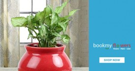 Bookmyflower Plant Sale: Order Plants @ Lowest Prices from Rs. 299