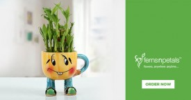 Ferns n petals Lucky Bamboo Plants Starting From Rs. 499