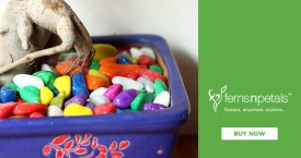 Ferns n petals Best Deal : Gardening Pebbles Starting From Rs. 199