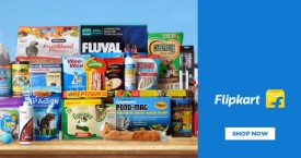 Flipkart Pet Supplies Starts From Rs. 25