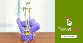 Floweraura Indoor Plants Starts At Rs. 499